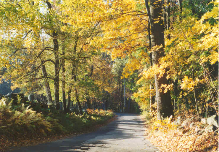 A scenic road in Weston during the fall