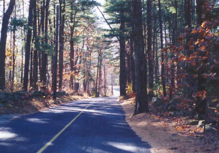 A scenic road surrounded by straight trees
