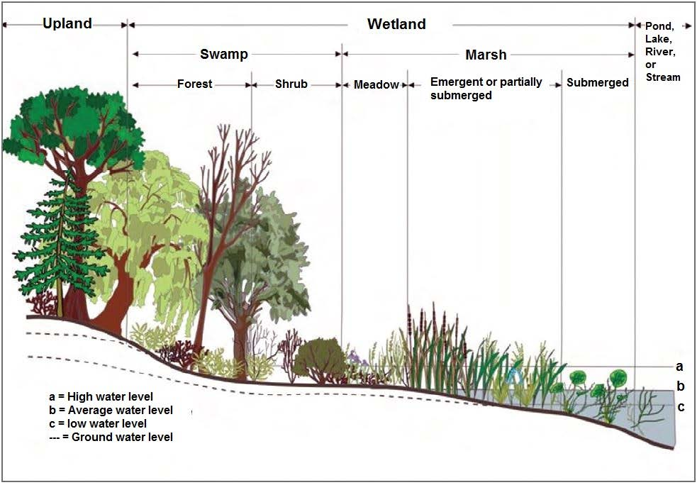 Wetlands defined infographic